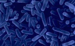 Legionnaires-disease-2